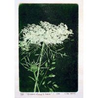 Queen-Anne's-Lace wit